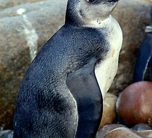 Baby Penguin by ApeArt