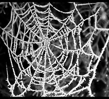 frost on web by Ana GR