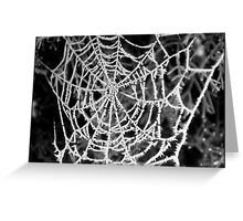 frost on web Greeting Card