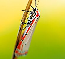Bug by Nathan Lovas Photography