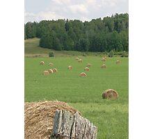 Hay! Photographic Print
