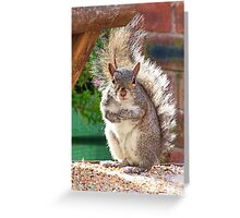 Squirrel on my Bird Table Greeting Card