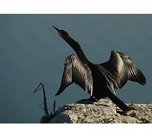 Wings of the Anhinga Photographic Print