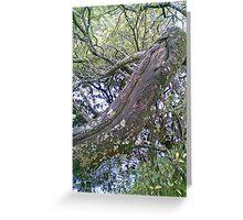 Gougane Barra Sept 2008 No. 03 Greeting Card