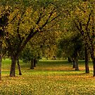 Tree Lane in Fall by PrecisionFX