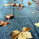 """Autumn Leaves in Perth"" Western Australia by wildimagenation"