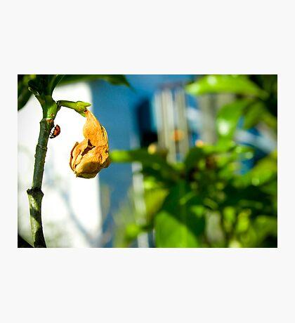 New Life Photographic Print