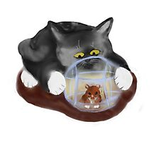 Hamster Ball and Curious Kitten Photographic Print