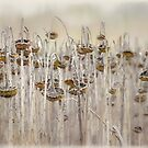 Winter sunflower field by Jacque Gates