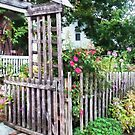 Roses on a Weathered Picket Fence by Susan Savad