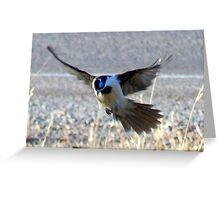*Blue Faced Honey Eater* Greeting Card
