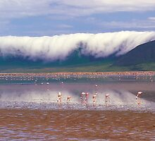 Ngorongoro Crater by Gavri