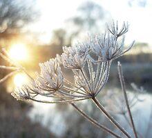 Frosty Morning by sleza69