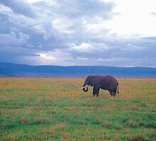 Elephant by Gavri