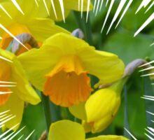 Daffodils.... Sticker