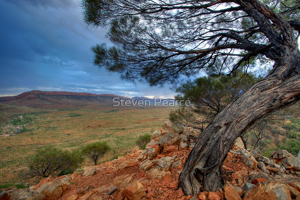 Acacia over Ormiston Pound by Steven Pearce