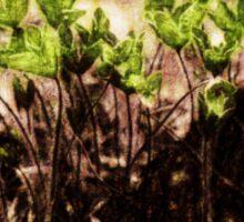Endgraving Forest 13 Sticker