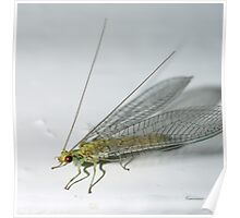 Lace Wing Insect (Macro) Poster