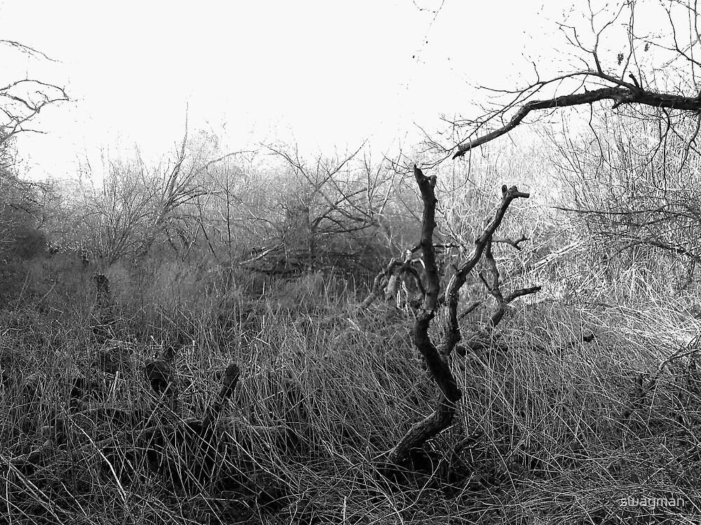 Desolate Waste by swagman
