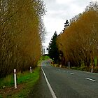 New Zealand country road by dazzleng