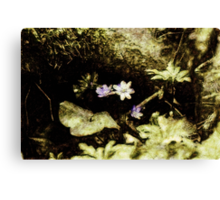 Endgraving Forest 1 Canvas Print