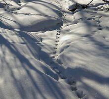 Snow Tracks by Adam Bykowski