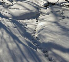 Snow Tracks by Adam Bykowski
