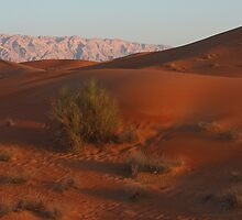 Desert Panorama 2 by David Clark
