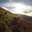 Brecon Beacons Wild Pony by Nick  Gill