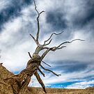 twisted by Kevin Williams