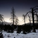 ghosts of forests past by Kevin Williams