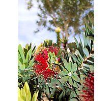 """Pollination"" Photographic Print"
