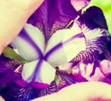 Erotic Iris Sticker