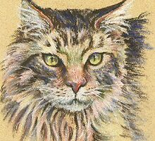 Maine Coon cat. by Maureen Whittaker