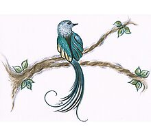 long tail bird Photographic Print