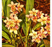 Yellow Ground Orchids in January Photographic Print