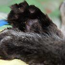 Kitty kitty feet by misiabe80