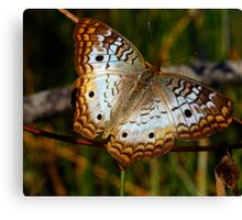 White Peacock Butterfly in Fractalius Canvas Print