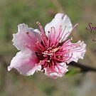 Spring is here! by Dana Yoachum