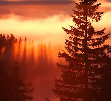 Sunset over trees and clouds by Sandra Kemppainen