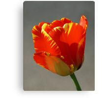Flaming Tulip! Canvas Print