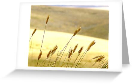 Prairie Grass by George Cousins