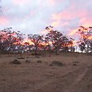 Fire in the Trees - Jindabyne by starbuggirl