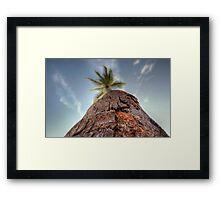 Focus Tree Framed Print