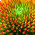 Center of a Coneflower by lindsycarranza