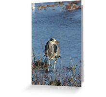 Bored Heron Greeting Card