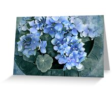 Hydrangea in Blue Greeting Card