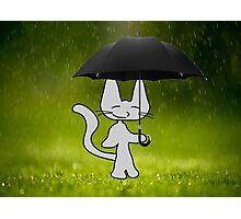 Cat In The Rain Photographic Print