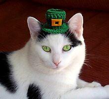 Cool Irish Cat by James Brotherton