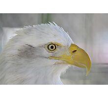 Fontana Eagle Portrait 3 Photographic Print